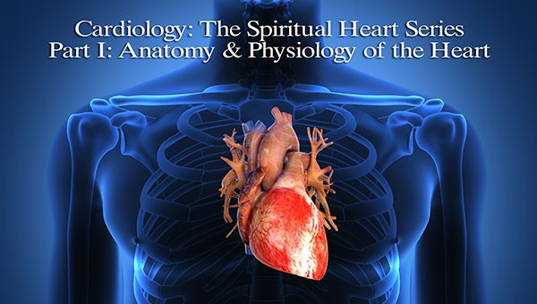 Cardiology: The Spiritual Heart Series - Part I: Anatomy